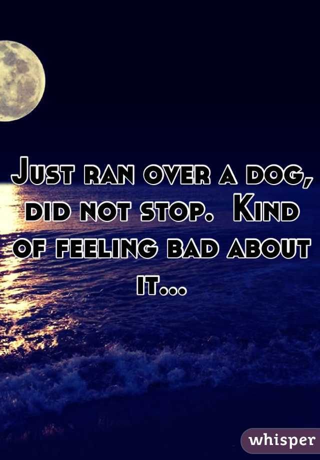 Just ran over a dog, did not stop.  Kind of feeling bad about it...