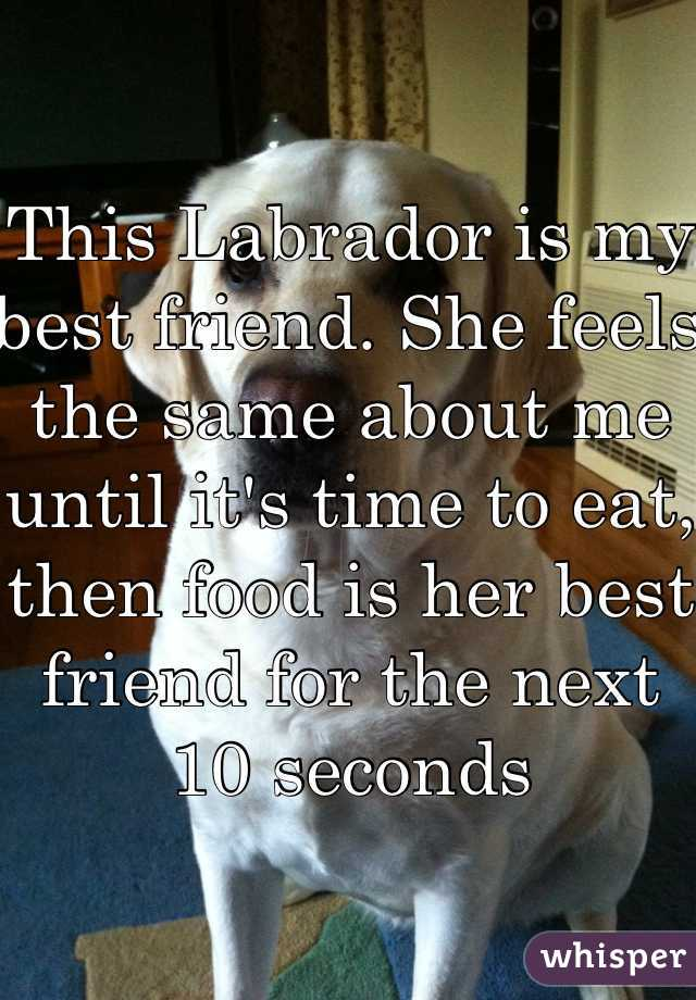 This Labrador is my best friend. She feels the same about me until it's time to eat, then food is her best friend for the next 10 seconds