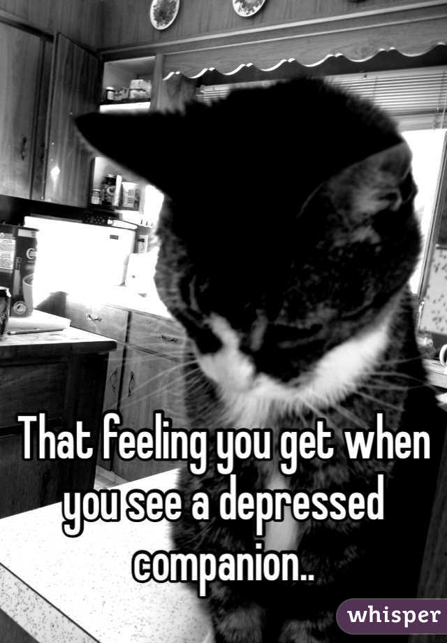 That feeling you get when you see a depressed companion..