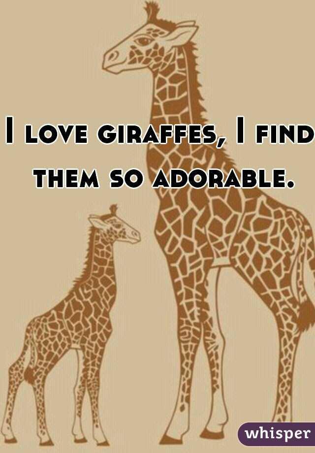 I love giraffes, I find them so adorable.
