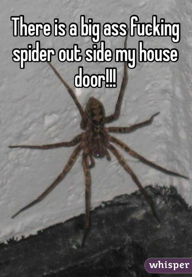 There is a big ass fucking spider out side my house door!!!