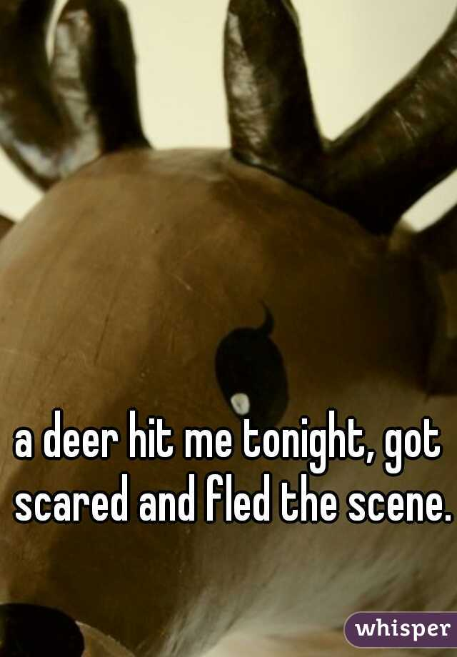 a deer hit me tonight, got scared and fled the scene.