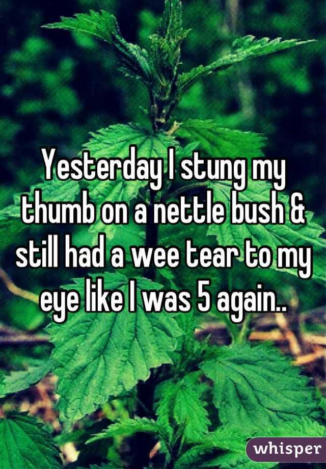 Yesterday I stung my thumb on a nettle bush & still had a wee tear to my eye like I was 5 again..