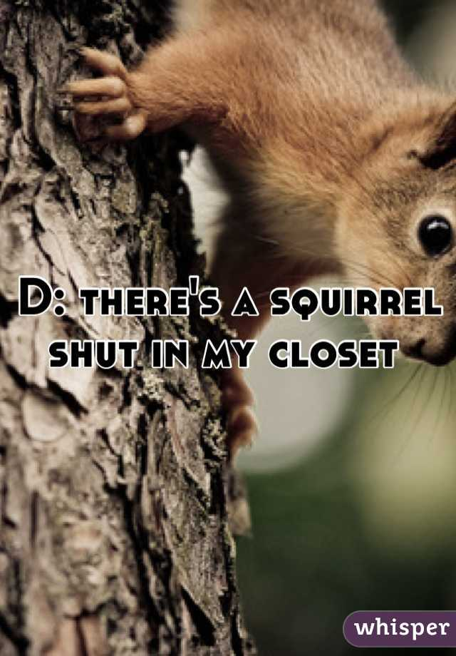D: there's a squirrel shut in my closet