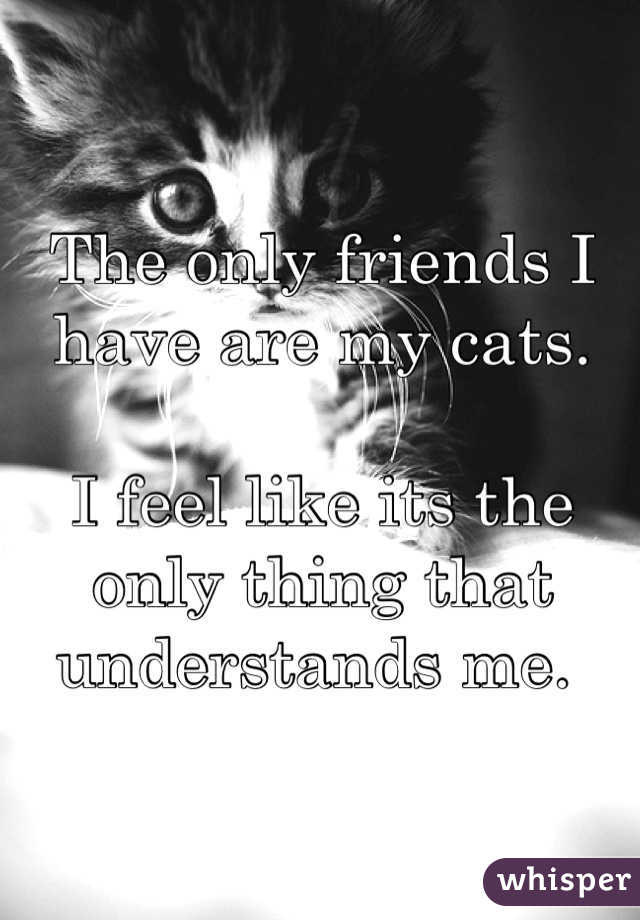 The only friends I have are my cats.  I feel like its the only thing that understands me.