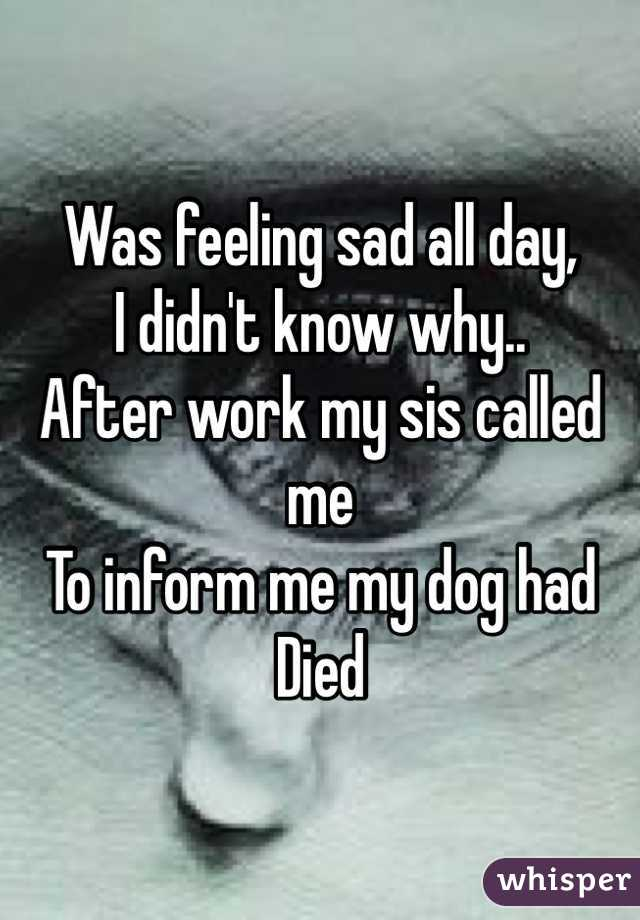 Was feeling sad all day,  I didn't know why.. After work my sis called me  To inform me my dog had Died