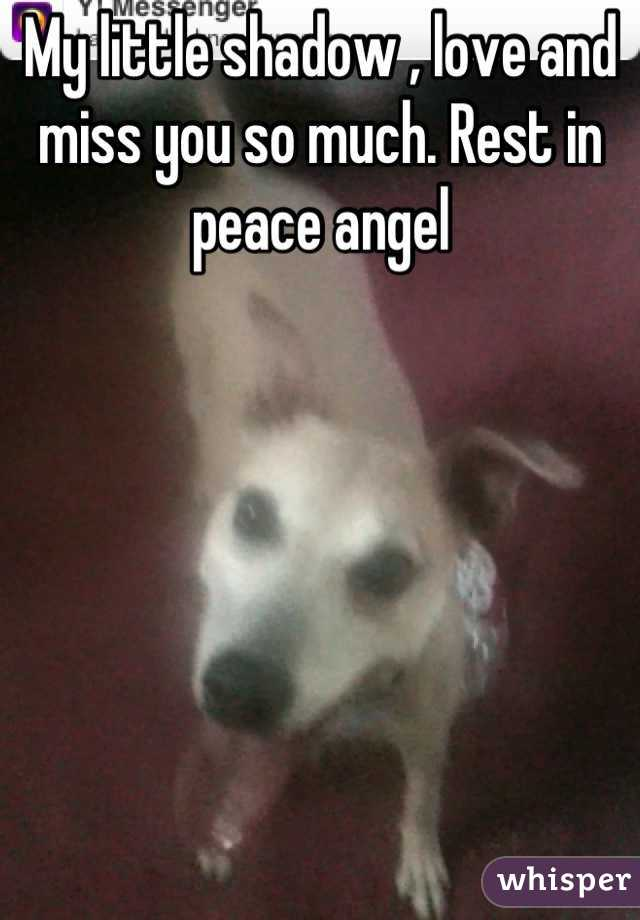 My little shadow , love and miss you so much. Rest in peace angel