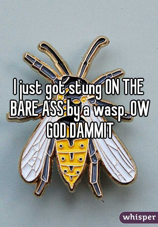 I just got stung ON THE BARE ASS by a wasp. OW GOD DAMMIT