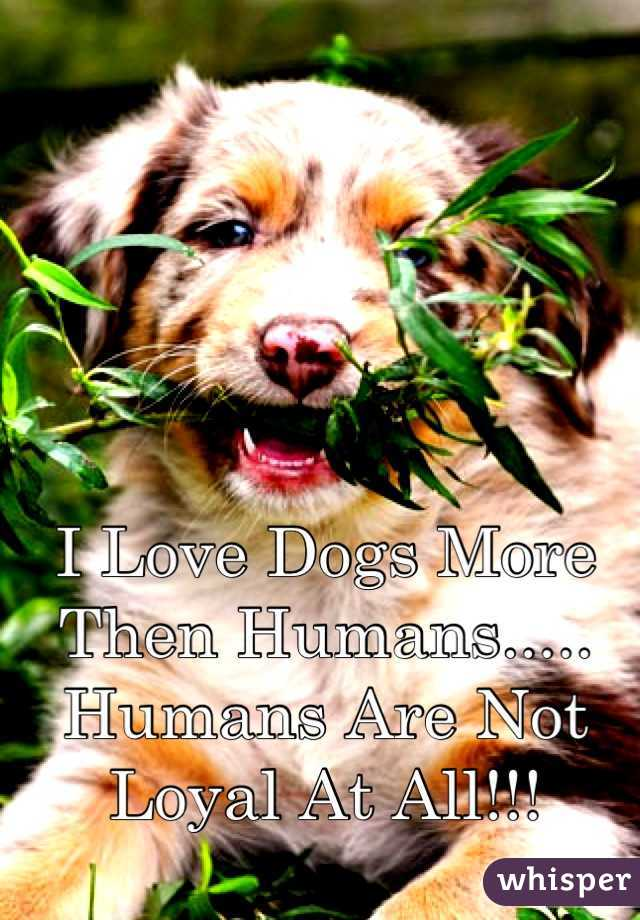 I Love Dogs More Then Humans.....  Humans Are Not Loyal At All!!!