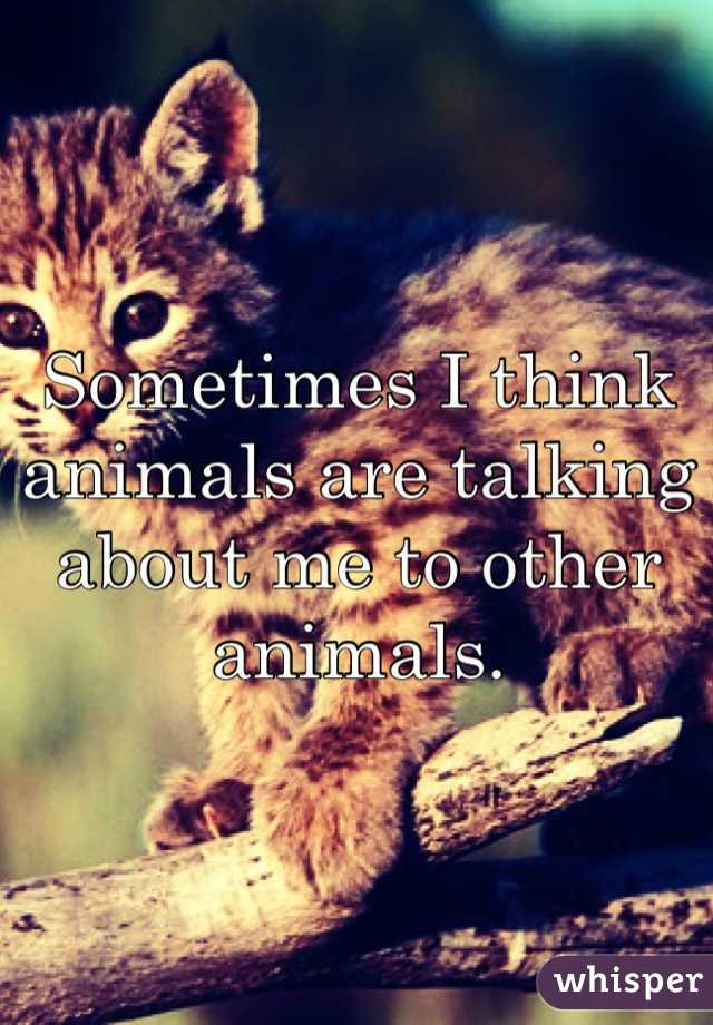 Sometimes I think animals are talking about me to other animals.