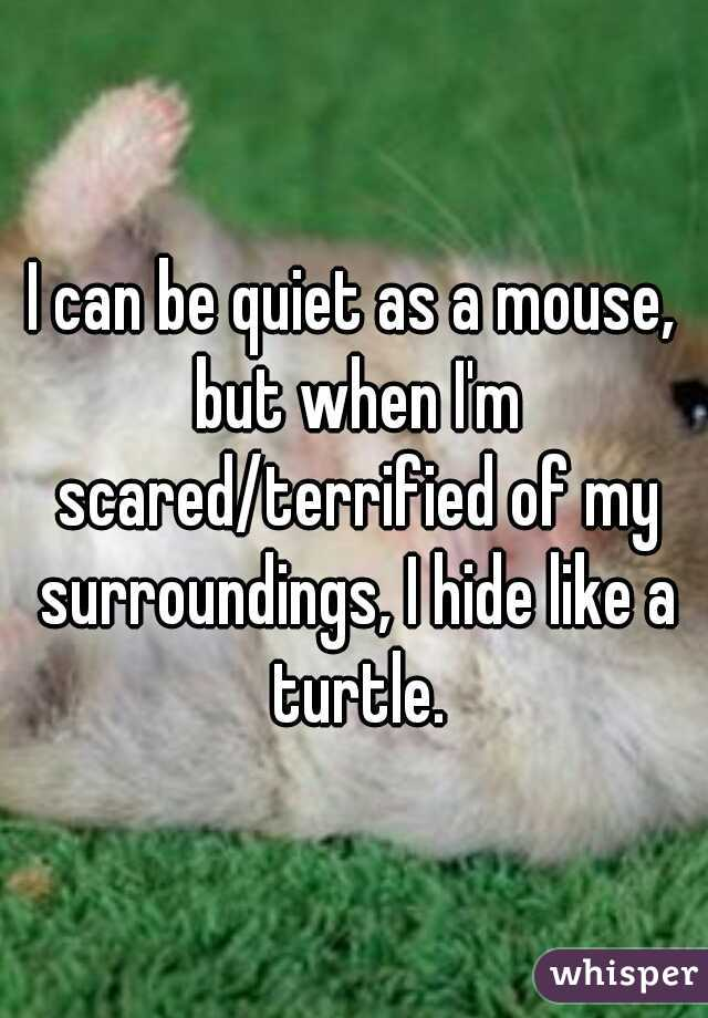 I can be quiet as a mouse, but when I'm scared/terrified of my surroundings, I hide like a turtle.