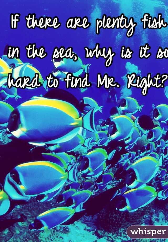 If there are plenty fish in the sea, why is it so hard to find Mr. Right?