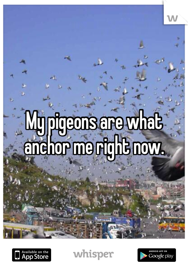 My pigeons are what anchor me right now.