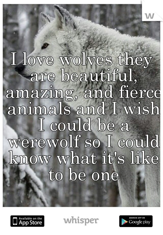 I love wolves they are beautiful, amazing, and fierce animals and I wish I could be a werewolf so I could know what it's like to be one