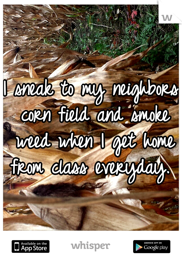 I sneak to my neighbors corn field and smoke weed when I get home from class everyday.