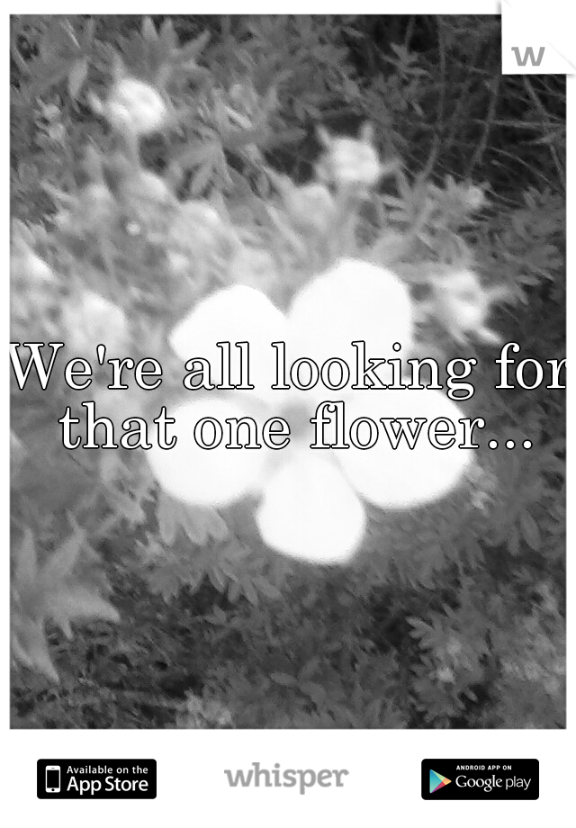 We're all looking for that one flower...