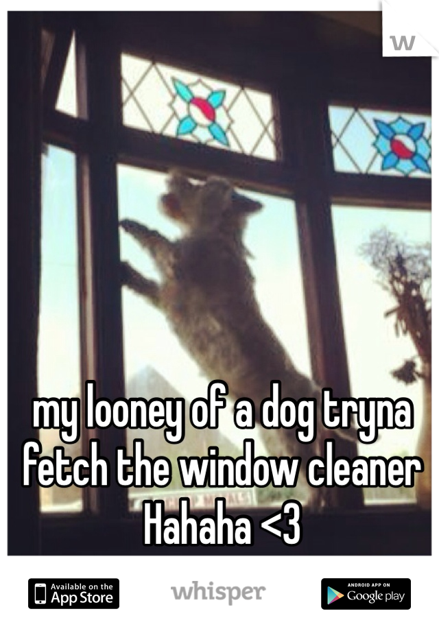 my looney of a dog tryna fetch the window cleaner Hahaha <3