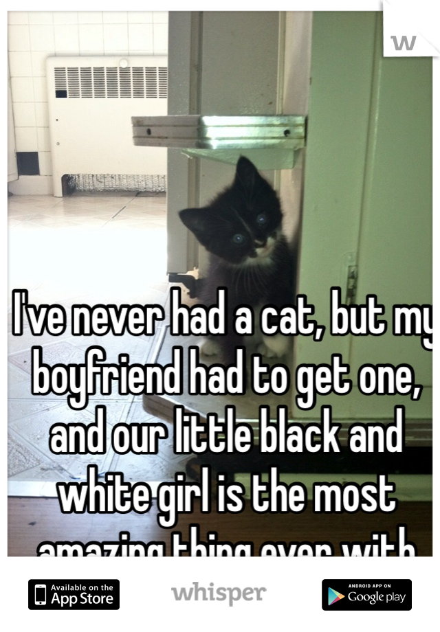 I've never had a cat, but my boyfriend had to get one, and our little black and white girl is the most amazing thing ever with her big blue eyes. <3