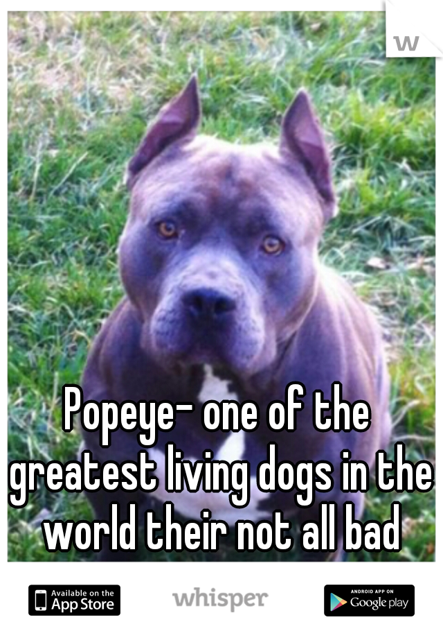 Popeye- one of the greatest living dogs in the world their not all bad