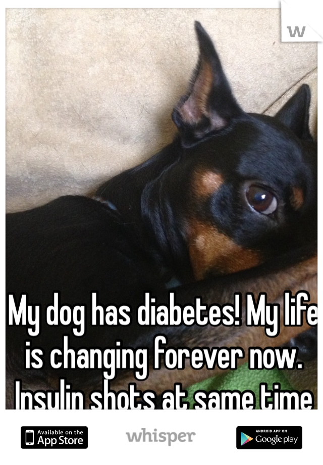 My dog has diabetes! My life is changing forever now. Insulin shots at same time every day, twice a day :(