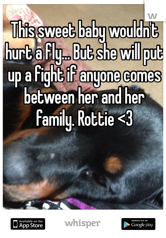 This sweet baby wouldn't hurt a fly... But she will put up a fight if anyone comes between her and her family. Rottie <3