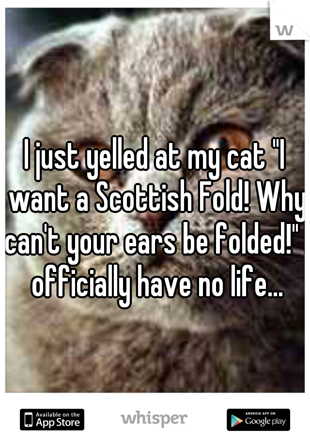 """I just yelled at my cat """"I want a Scottish Fold! Why can't your ears be folded!"""" I officially have no life..."""