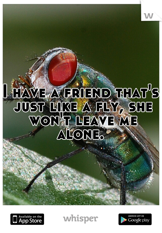 I have a friend that's just like a fly, she won't leave me alone.