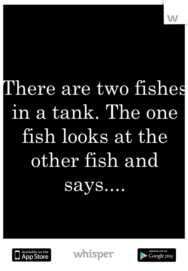 There are two fishes in a tank. The one fish looks at the other fish and says....