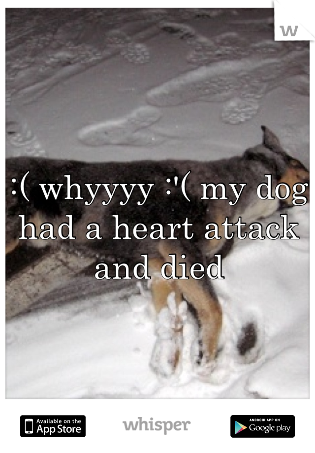 :( whyyyy :'( my dog had a heart attack and died