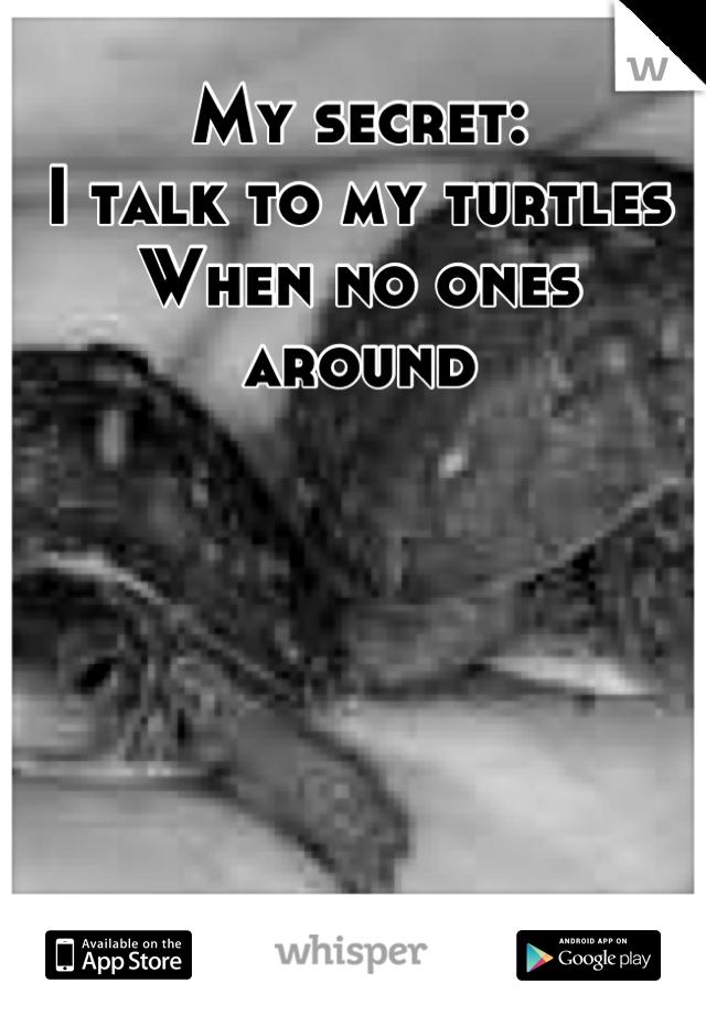 My secret: I talk to my turtles When no ones around