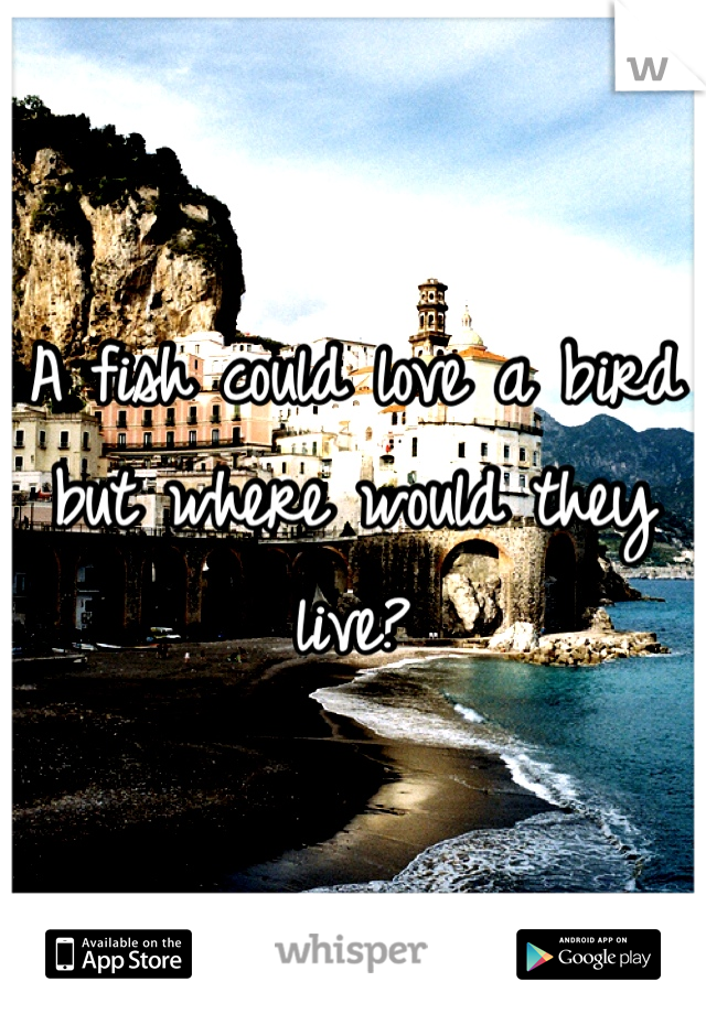 A fish could love a bird but where would they live?