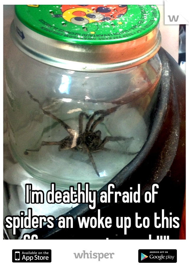 I'm deathly afraid of spiders an woke up to this effer on my stomach!!!!