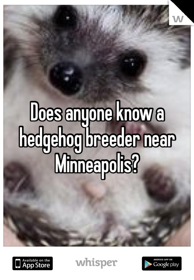 Does anyone know a hedgehog breeder near Minneapolis?