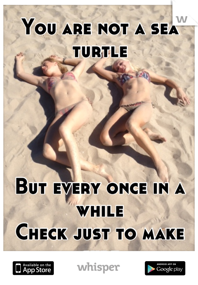 You are not a sea turtle      But every once in a while Check just to make sure