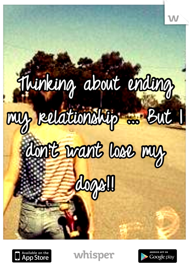 Thinking about ending my relationship ... But I don't want lose my dogs!!
