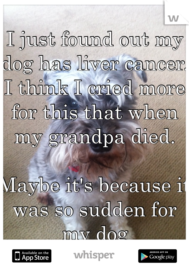 I just found out my dog has liver cancer. I think I cried more for this that when my grandpa died.   Maybe it's because it was so sudden for my dog
