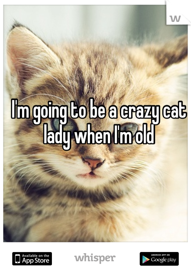 I'm going to be a crazy cat lady when I'm old