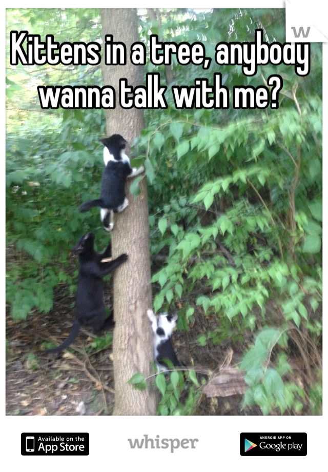 Kittens in a tree, anybody wanna talk with me?