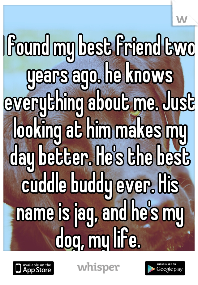 I found my best friend two years ago. he knows everything about me. Just looking at him makes my day better. He's the best cuddle buddy ever. His name is jag, and he's my dog, my life.