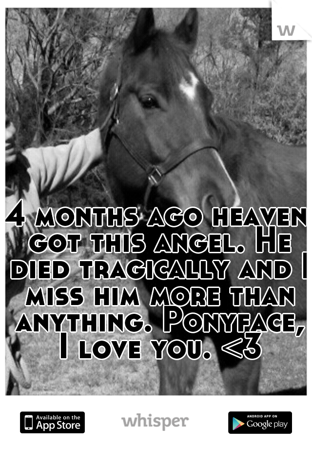 4 months ago heaven got this angel. He died tragically and I miss him more than anything. Ponyface, I love you. <3