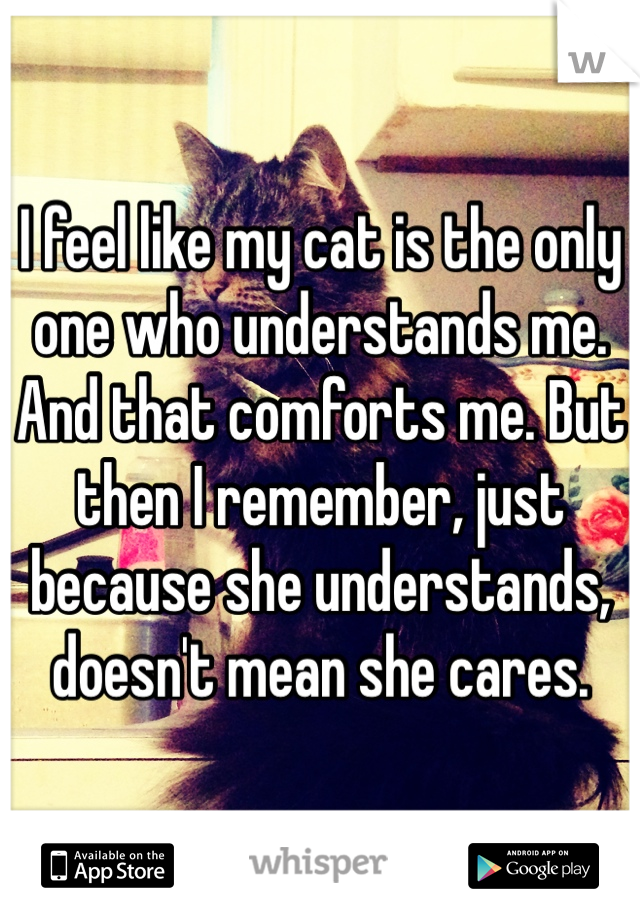 I feel like my cat is the only one who understands me. And that comforts me. But then I remember, just because she understands, doesn't mean she cares.
