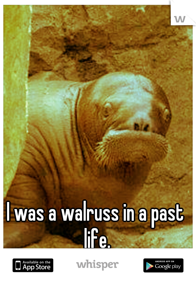 I was a walruss in a past life.