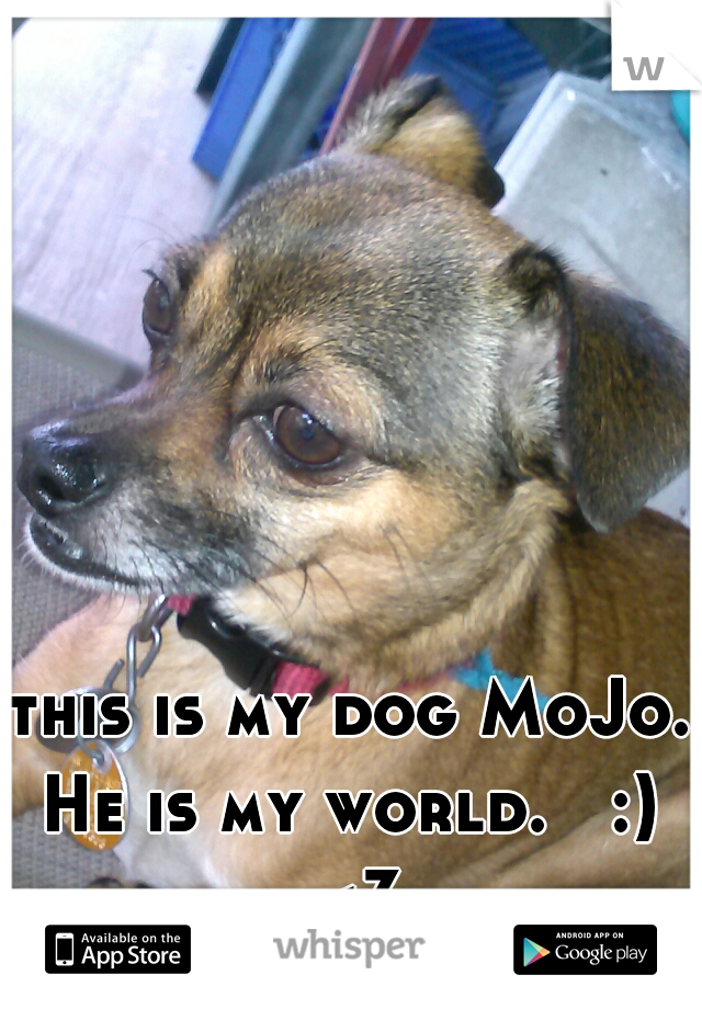 this is my dog MoJo. He is my world.   :)  <3
