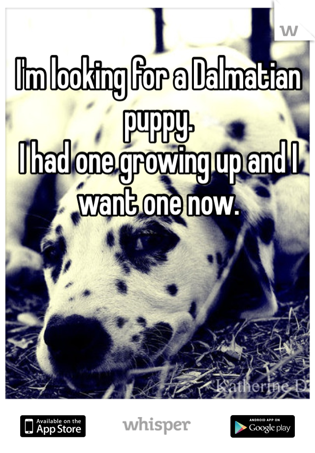 I'm looking for a Dalmatian puppy.  I had one growing up and I want one now.