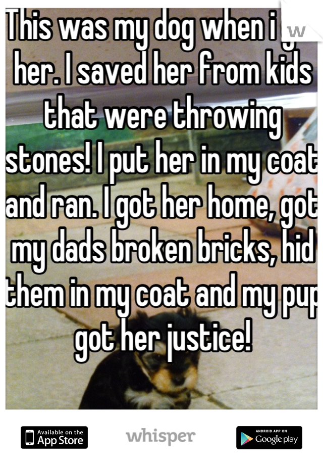 This was my dog when i got her. I saved her from kids that were throwing stones! I put her in my coat and ran. I got her home, got my dads broken bricks, hid them in my coat and my pup got her justice!