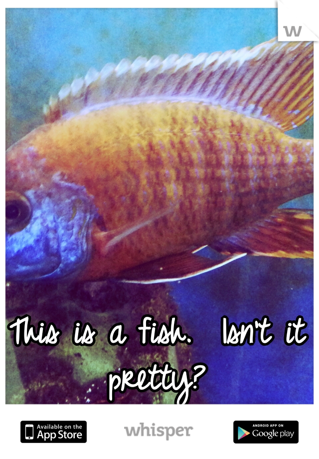 This is a fish.  Isn't it pretty?