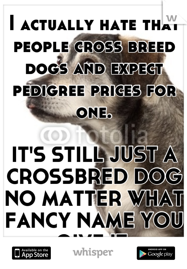 I actually hate that people cross breed dogs and expect pedigree prices for one.  IT'S STILL JUST A CROSSBRED DOG NO MATTER WHAT FANCY NAME YOU GIVE IT.