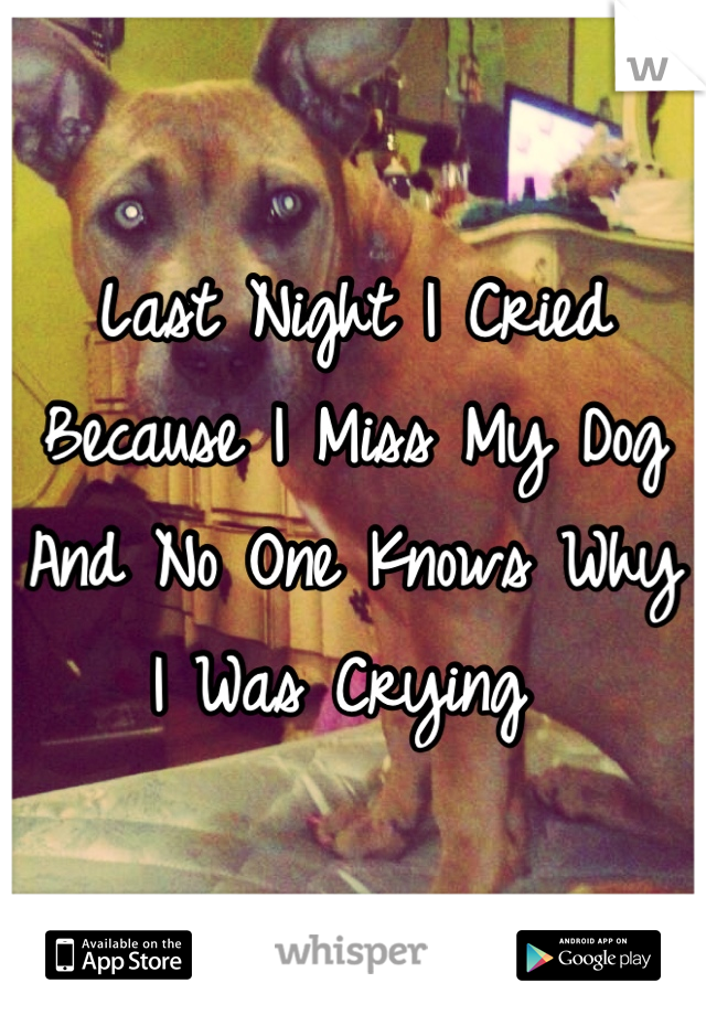 Last Night I Cried Because I Miss My Dog And No One Knows Why I Was Crying