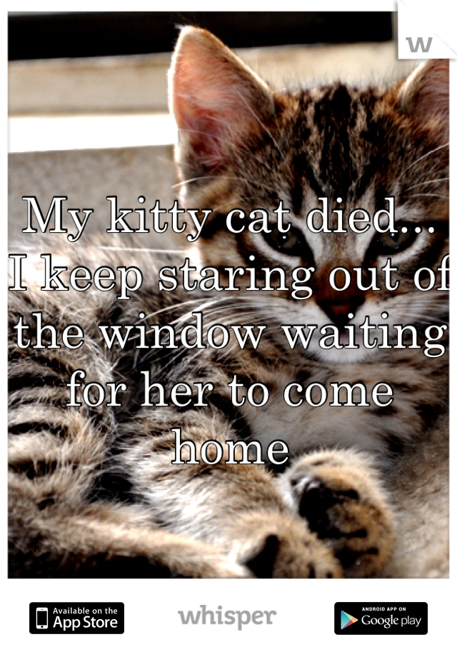My kitty cat died...  I keep staring out of the window waiting for her to come home