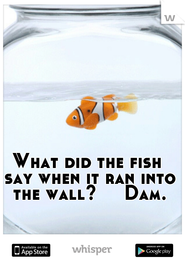 What did the fish say when it ran into the wall?     Dam.